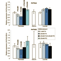 Hnf1b expression is downregulated in response to cytotoxic fatty acid